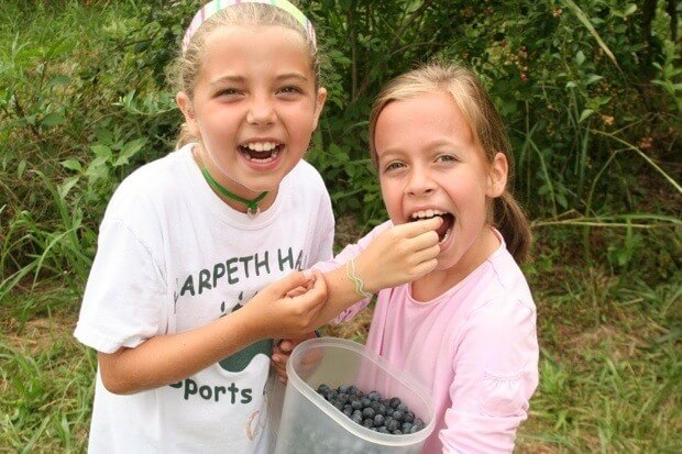 Blueberry Picking, a Late Summer Tradition