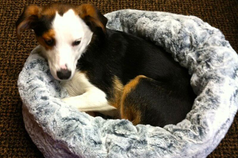 Mister tries out the new dog beds at Menage - and gives them a four-paw rating.