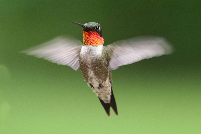 Image credit: Strawberry Plains Audubon Center in Holly Springs, MS
