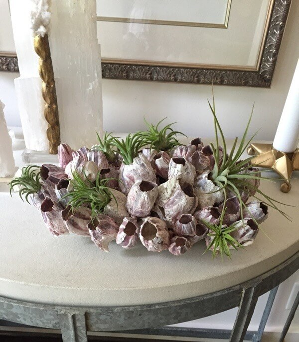 Surround this piece in white for a completely clean and natural look, where the soft green of the air plants has a soothing appeal. | Image credit: Lydia Pursell