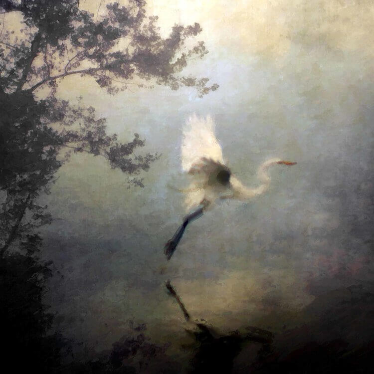 Flight of the Crane by Christine Patterson