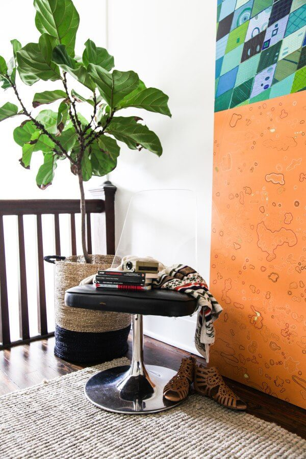 A fiddle leaf fig makes a strong interior design impact in any room.
