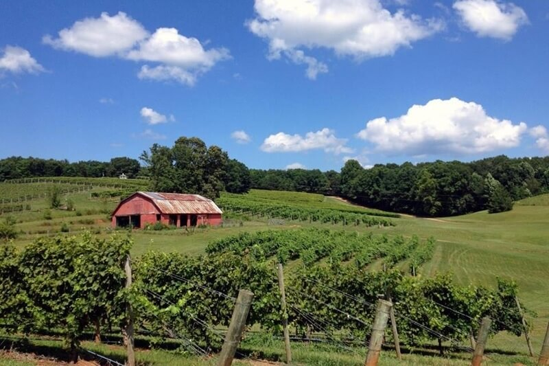 Take a Wine Tour Through Picturesque North Georgia