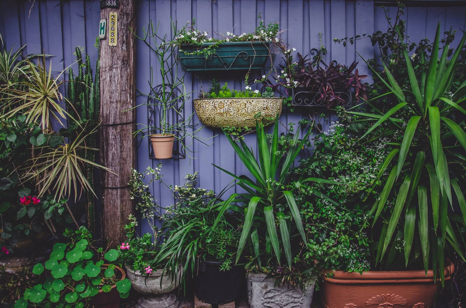 Or get wild and eclectic with your container gardening!