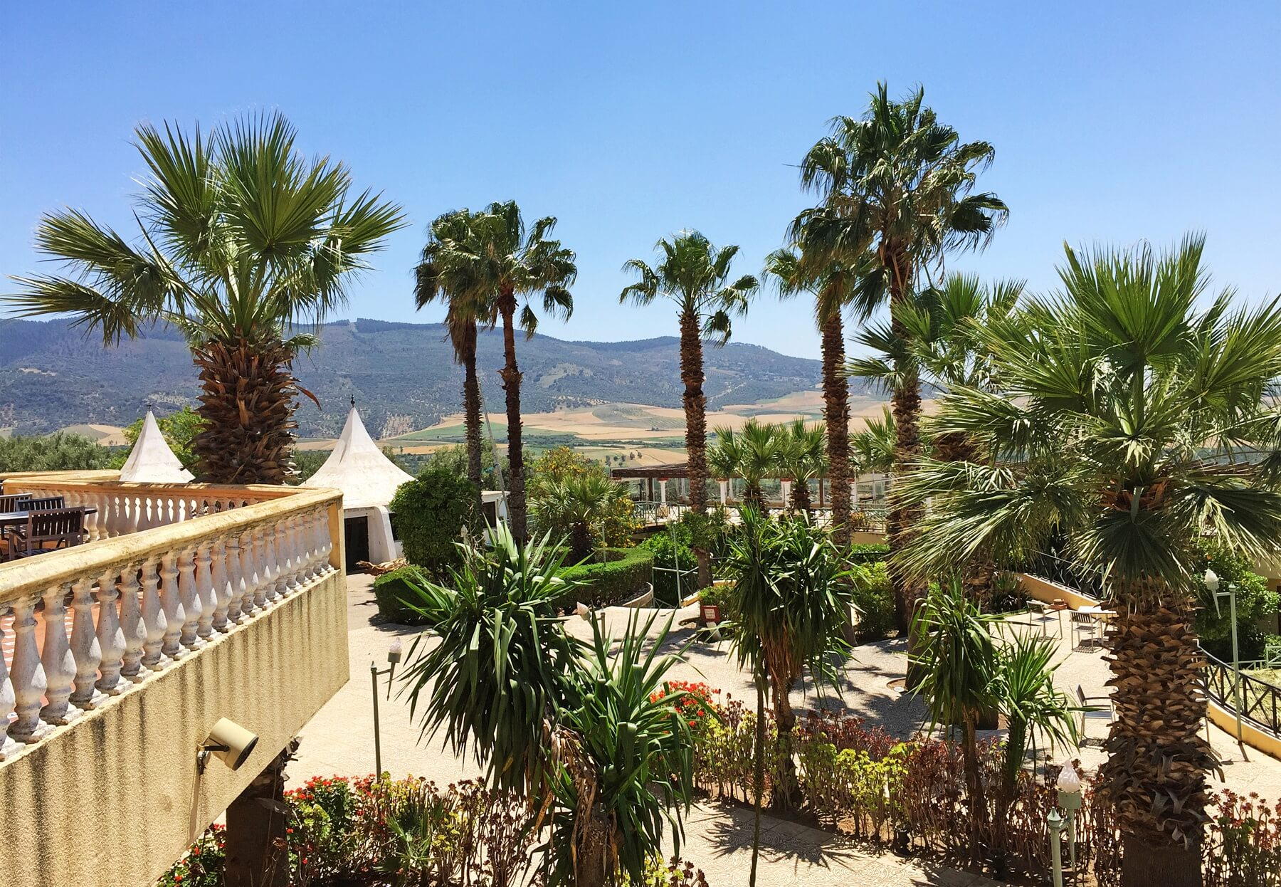 A hotel patio boasts towering palm trees set against the backdrop of the mountains.