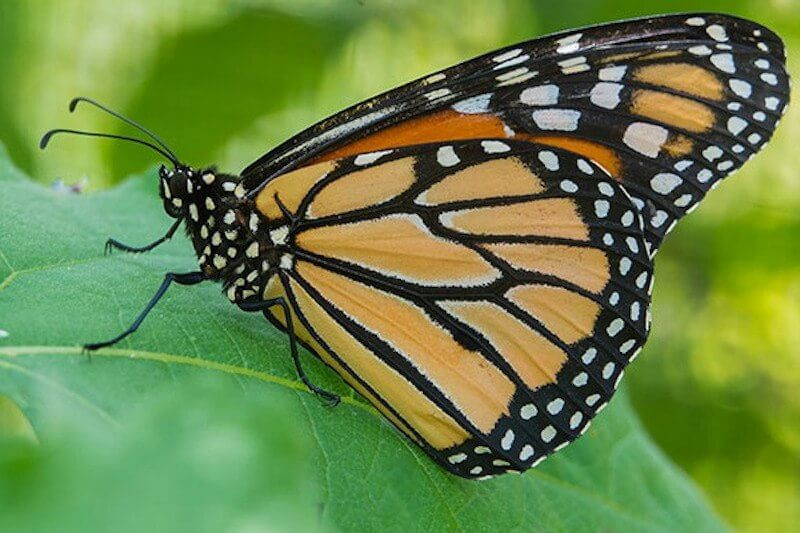 Sep 23: Flutter Fest at the Louisville Zoo