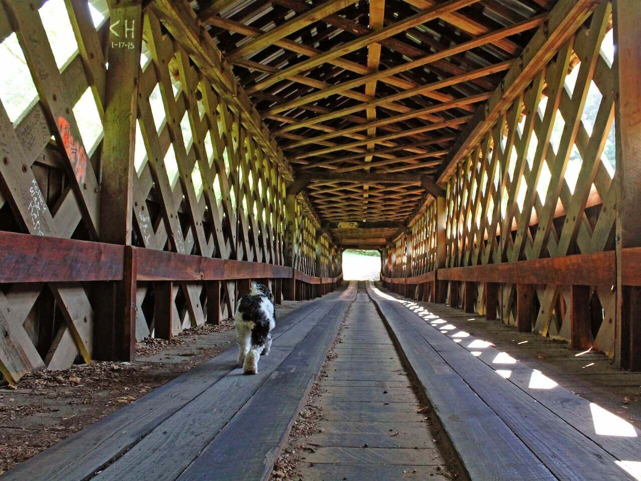 A furry friend explores the bridge.