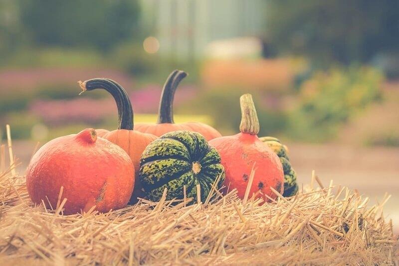 Louisville's Best Pumpkin Patches & Fall Festivals