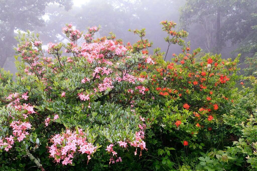 wildflower hike
