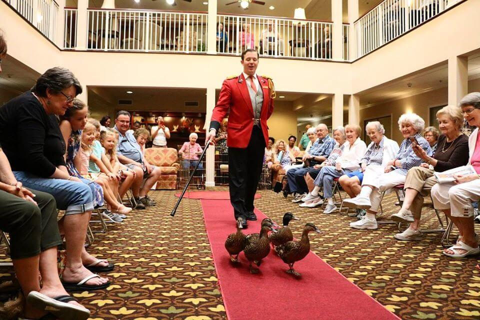March of the Peabody Ducks - Memphis Free Things To Do