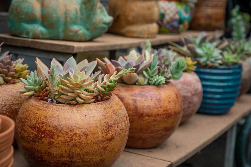 Pots filled with succulents