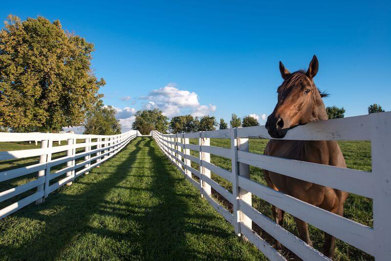 Kentucky horse country