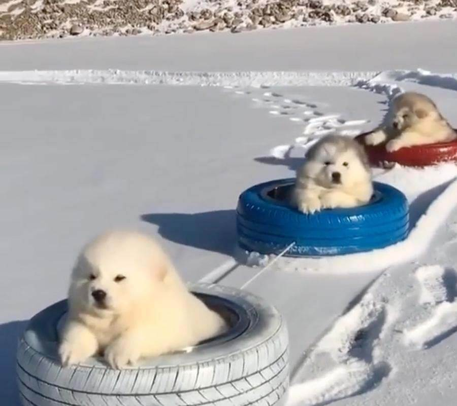 Good Distractions: puppies!