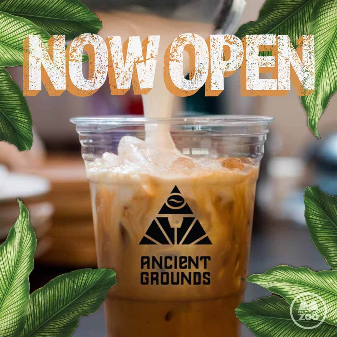 Iced coffee from Ancient Grounds at the Memphis Zoo