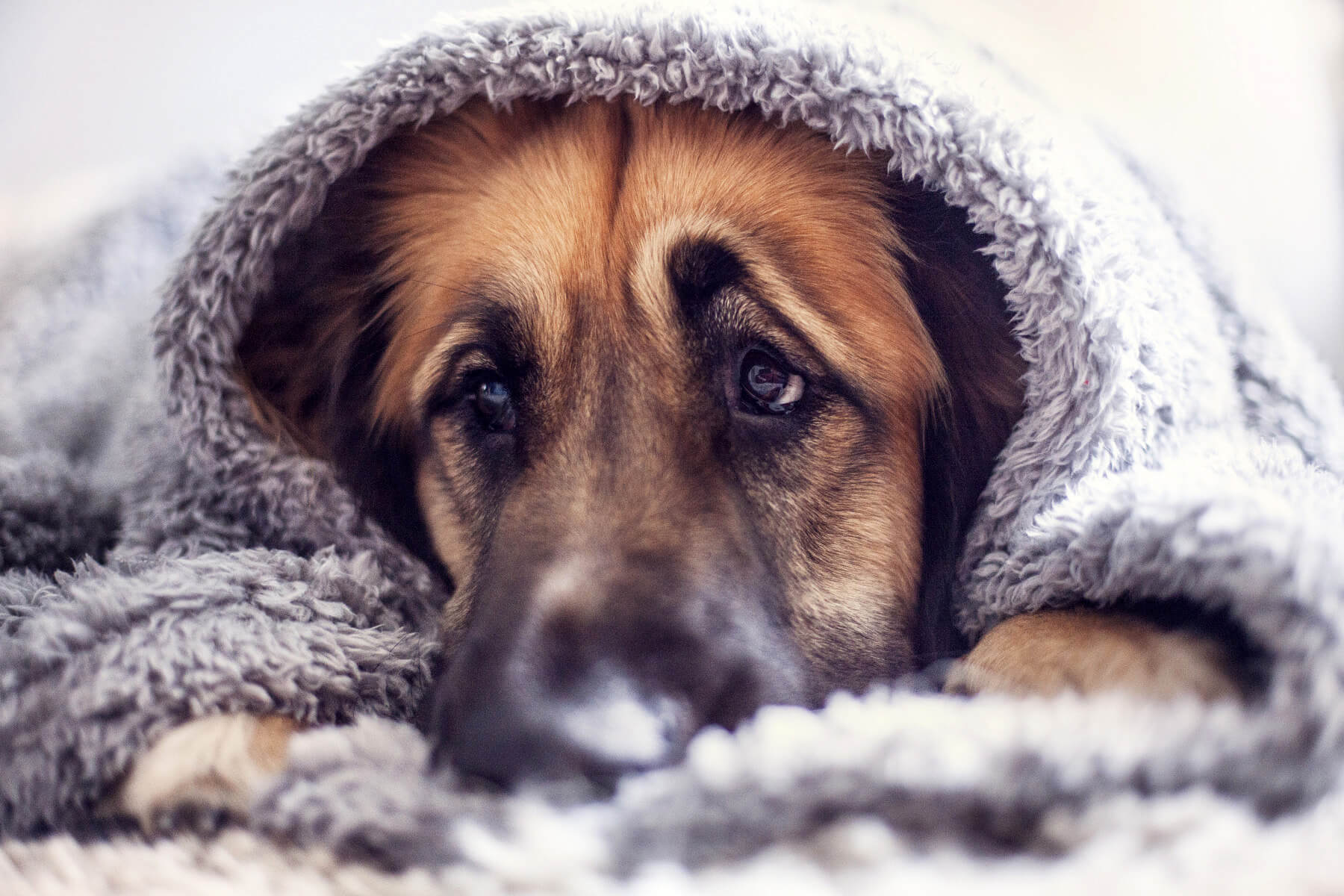 5 Ways to Comfort Your Fireworks-Averse Dog